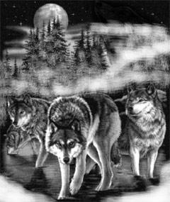 graue wölfe Winter