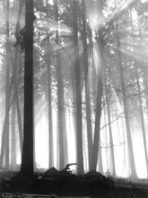 hexen wald