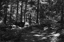 Wald Pilze Weg