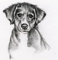 Hund von Magier Nakor